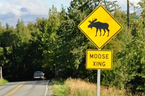 Moose-Crossing-300x199